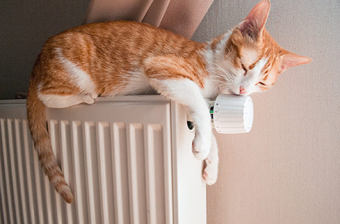 Chat sur un radiateur