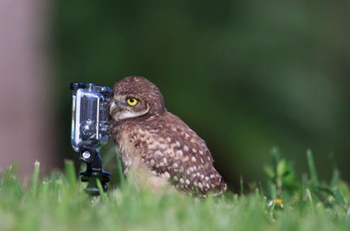 Une chouette avec une petite caméra de sport