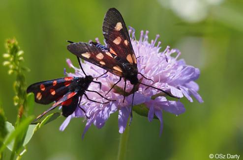 Photo fleur et papillons