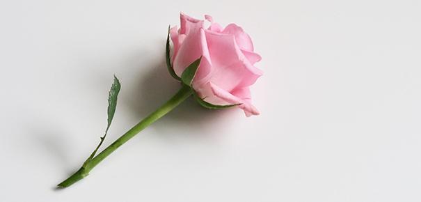 7 astuces pour conserver des fleurs coup es darty vous. Black Bedroom Furniture Sets. Home Design Ideas