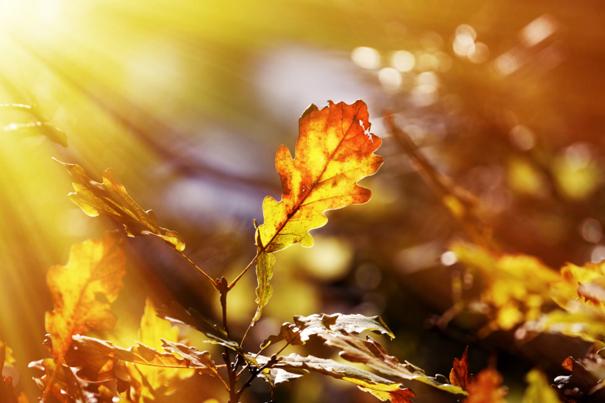 Conseils et id es de photographe pour de belles photos d - Image feuille automne ...