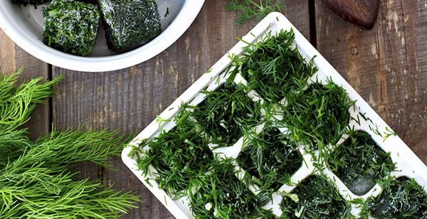 Herbes fra ches comment les conserver plus longtemps darty vous - Comment conserver du basilic ...