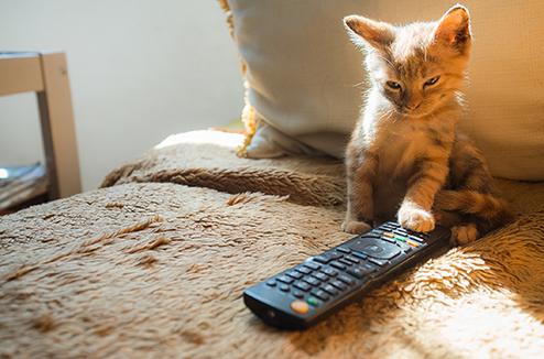 Que faire lorsqu'on a trop de télécommande ?
