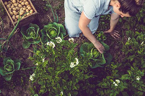 Planter vos légumes et vos fruits au bon moment